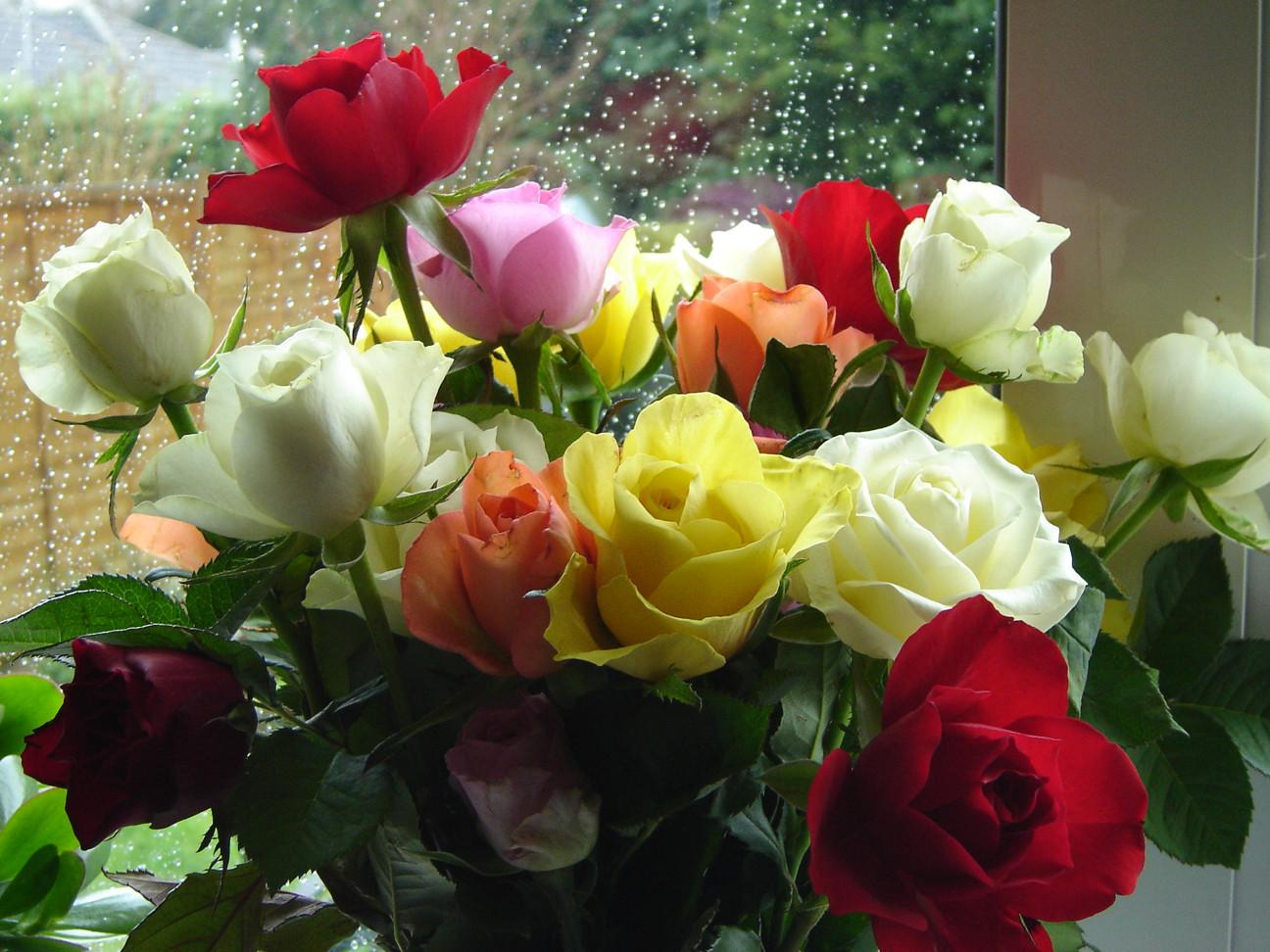 güller ile ilgili görsel sonucu