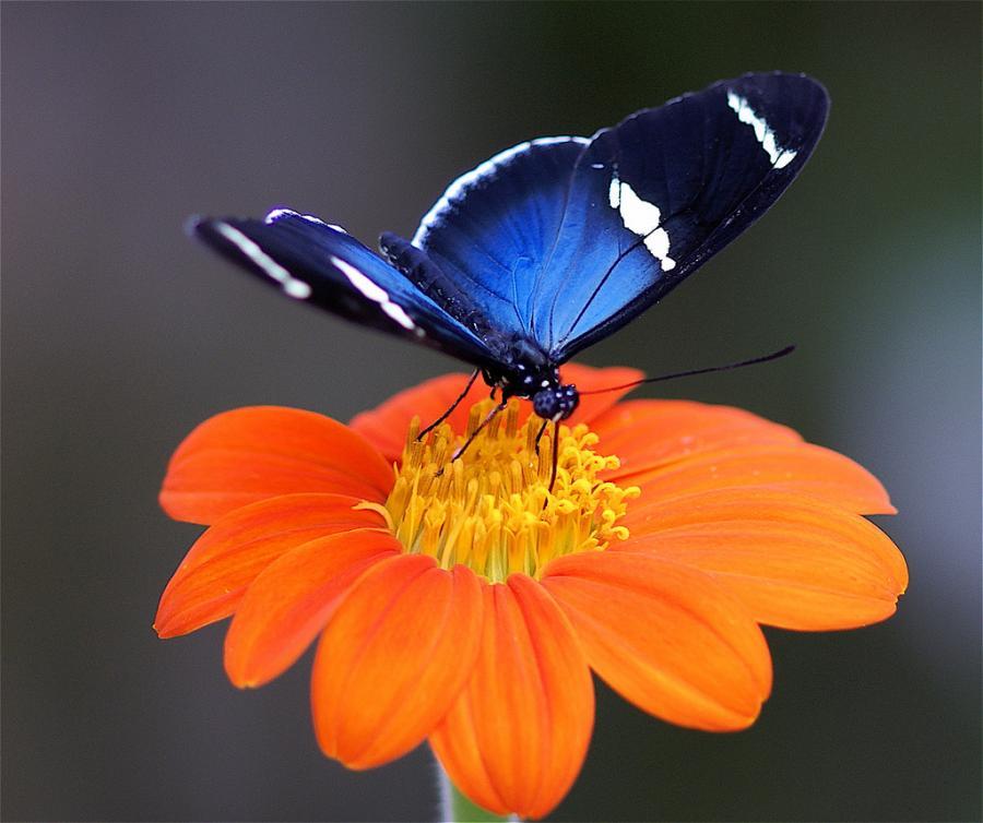 Фото картинки цветок для бабочки