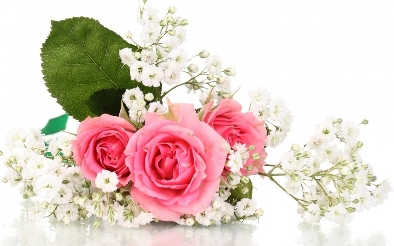 Цветы на белом фоне для открыток