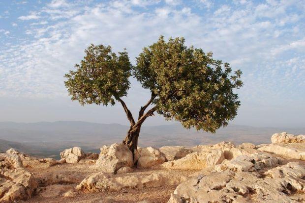 ODISSEUS ELITIS  YAŞADIM O SEVGİLİ ADI