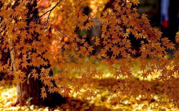Öğle Güneşi ve Gölge - Muhammed El-Maghutby Philippe Sainte-Laudy Maple Leaves .....
