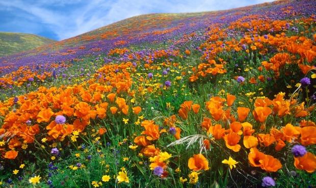 TAGORE ÇİÇEK OKULU  california