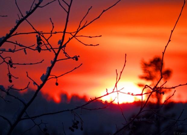ahmet-telli-bir-huzun-mevsiminden-cikarken-kalbim