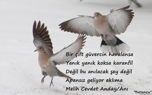 melih-cevdet-anday-ani
