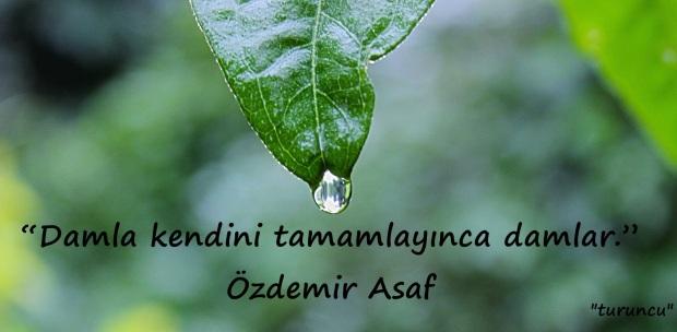 ozdemir-asaf-bahcede