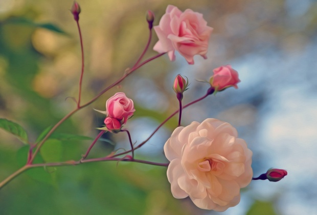 8-marta-prazdnik-tsvety-rozy-foto-kartina