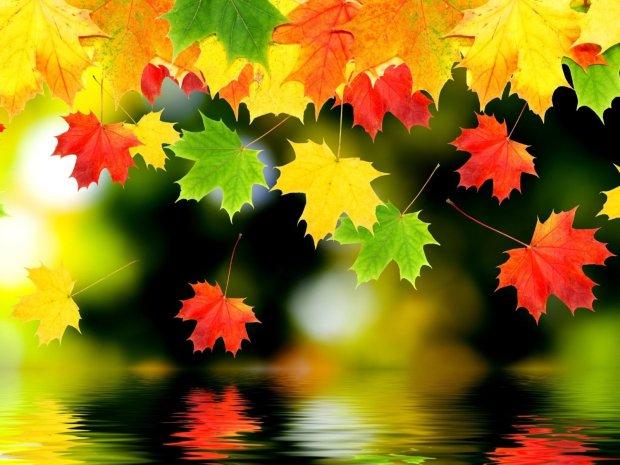 AFŞAR TİMUÇİN EKSİLMEYEN őszi levelek