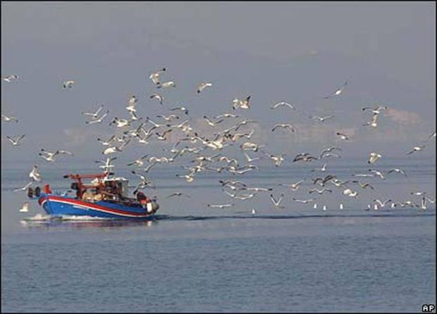 kemal özer deniz orakçısı