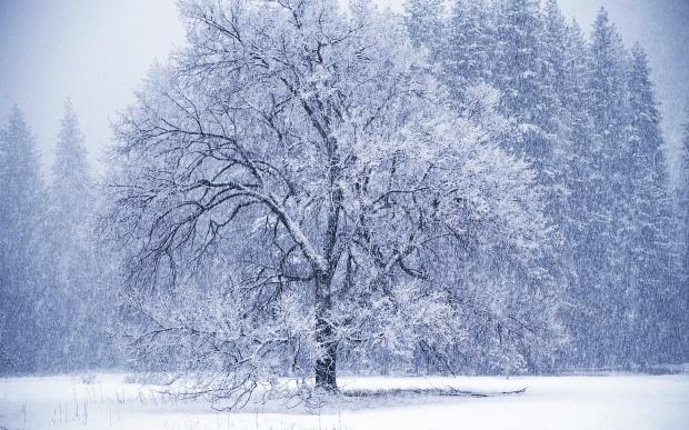 ÜlkÜ tamer kar