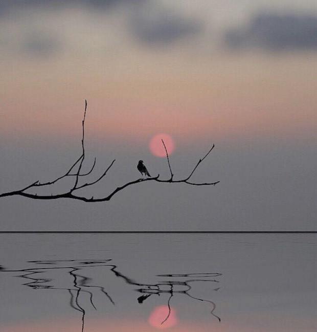 Gün Işığına - Adil İzci
