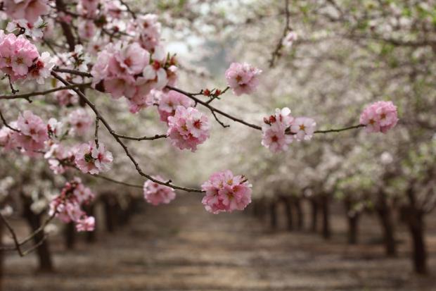 sennur sezer haykırı ©Nikolay