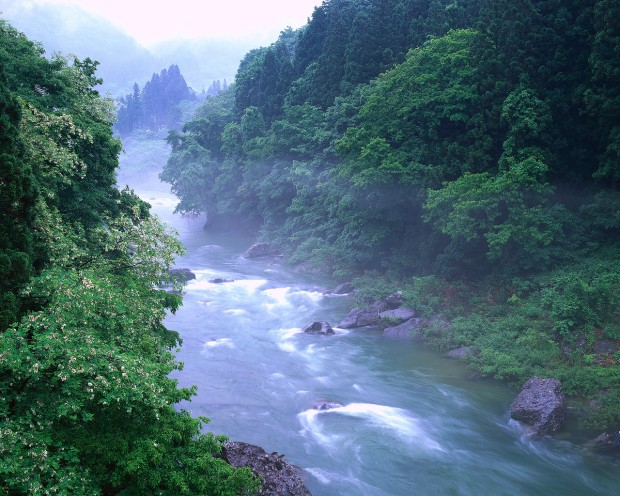 Mist at Tone River